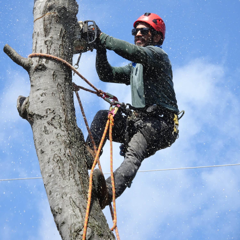 wycinka drzew chrzanów